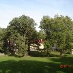 Park odzyskuje piekno dzieki pracom pielęgnacyjnym (dofinansowanie ze środków NFOŚiGW)